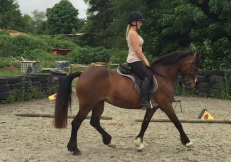 Friesian Horse for Available