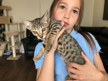 Adorable Savannah Kittens for sale