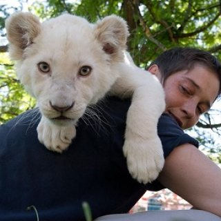 Healthy white lion available for good homes.