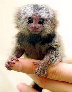 baby  monkeys to give out for
