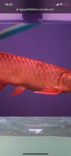 الأسماك المضبوطة واتس اب 14104177192+