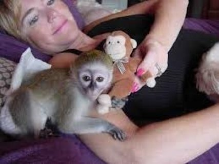 Healthy male and female baby Capuchin monkeys  They are very soc