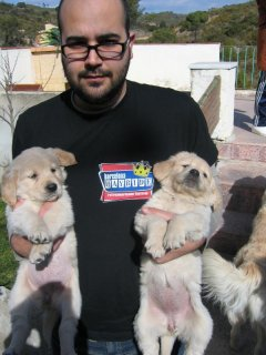 صور Male and Female Healthy Golden Retriever Puppies Ready For New H 1