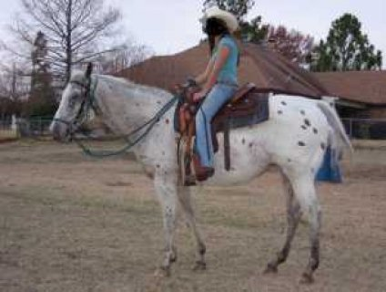 "Freckles"" has been my daughters horse, but my daughter has finis"