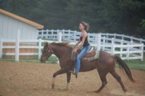 Quarter Gelding horse for sale
