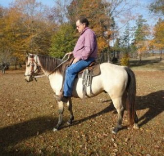 AQHA registered gelding (Quarter Horse)