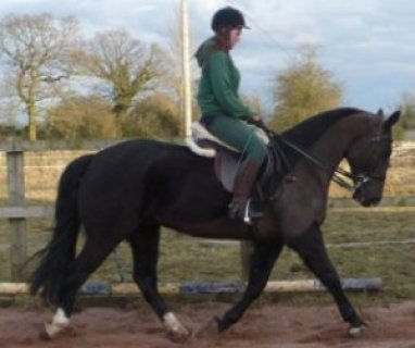 Smart & Brilliant Horse (Male and Female) For Sale
