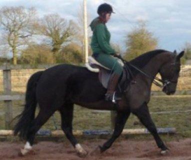 Smart & Brilliant Horse (Male and Female) For Sale