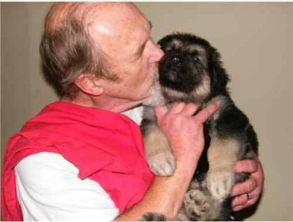 Two Adorable (Pure Breed) German Shepherd Puppies For Adoption