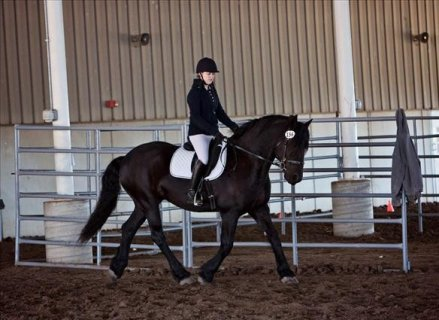 AMAZING AND ENERGETIC FRIESIANT HORSE FOR SALE......