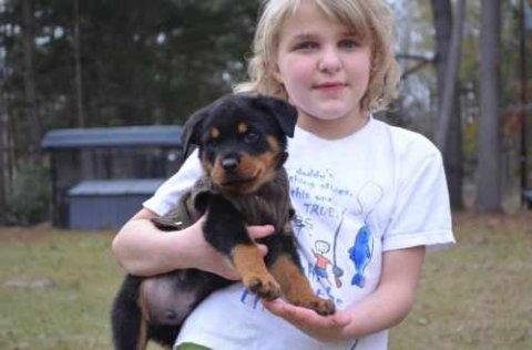 ر Cute Adorable Rottweiler Puppies Available for adotion