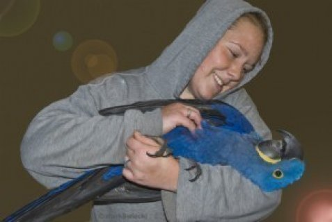 Home Raised Hyacinth Macaw for Sale