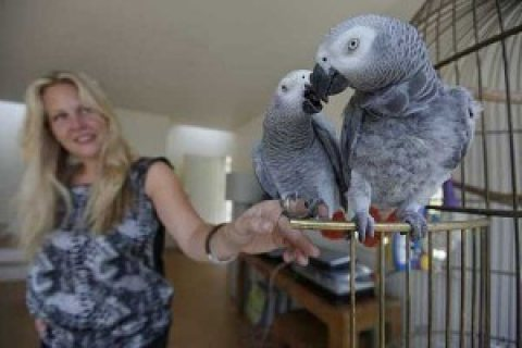 Cute African Grey Parrots for sale