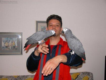African Grey Parrots!,,,,,