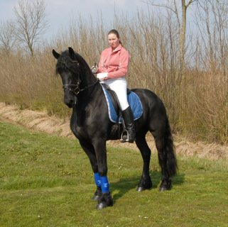 Beautiful Friesian Gelding Horses For Sale