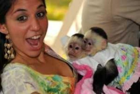 Beautiful baby capuchin monkeys For Sale