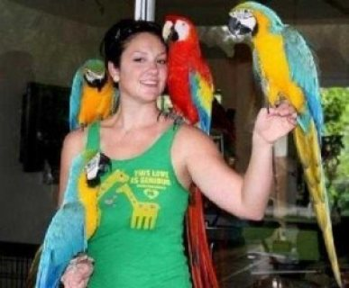 Two Lovely Blue and Gold Macaws parrots for sale.