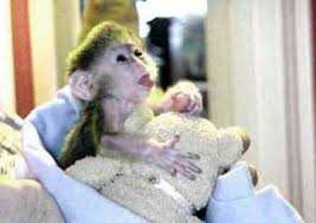 Affectionate Capuchin monkeys for adoption