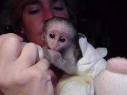 Baby/capuchin monkeys