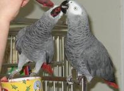 we have beautifull and well trained parrots for sale