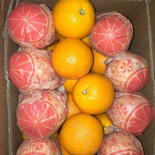 للبيع برتقال عصير مصرى عالى الجودة