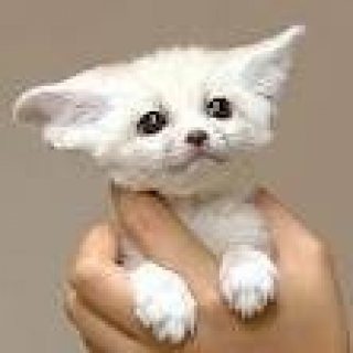 Male and Female Fennec Fox Kits For sale
