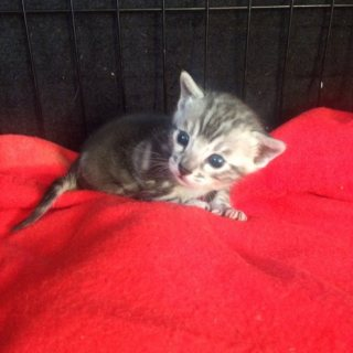 Lovely Bengal Kittens For Rehoming