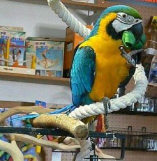 صور Hurry now and get a cheap macaw parrots for a good and affordabl 1