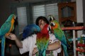 Cute Pair Of Macaw Birds