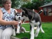Beautiful Siberian Husky Puppies