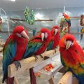 Adorable Macaw Parrots For Pet Lovers