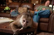 Outstanding Capuchin monkeys for sale