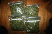 Best quality strains available for sale