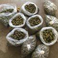 Marijuana for a good and better health